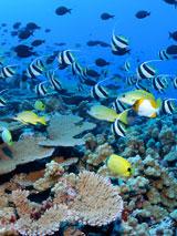 GtB Tauchen im Barrier Riff von Belize