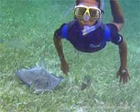 GtB Frei Tauchen mit Rochen in Belize