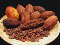 GtB Cacao Festival in Toledo Belize