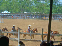 GtB Rodeo at the Trade & Livestock Show in Belmopan