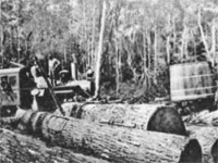 GtB Logging in the forest by Wamil Creek