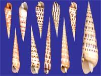 Auger Shells