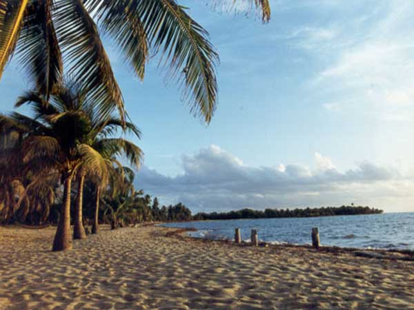 The Beach on Placencia