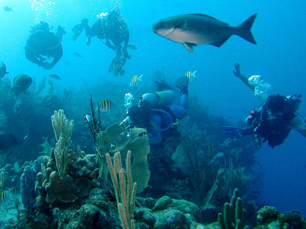 Diving at Great the Reef of Belize