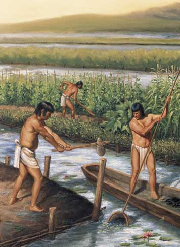 Maya Agriculture in Belize